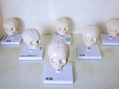 laboratorio-de-anatomia-10-1.jpg