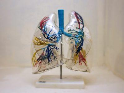 laboratorio-de-anatomia-12-1.jpg