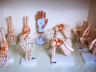 laboratorio-de-anatomia-16-1.jpg