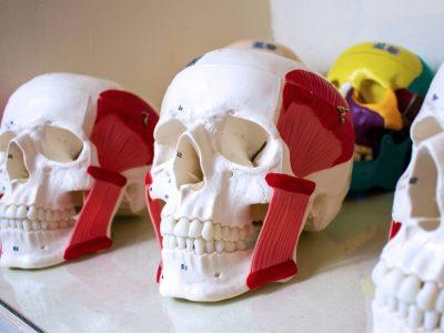 laboratorio-de-anatomia-6.jpg